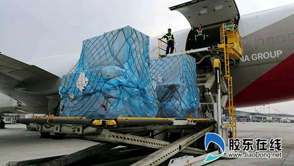 工作人员为飞机装载货物   胶东在线9月24日讯(记者 贾楚航 通讯员 常征 柳富宇)9月23日,韩国韩亚航空韩国至烟台B747全货机进港上下货舱全满,进港货量80吨,出港货物也几乎全满,货量达32吨,该货班理论业载是100吨,由于货物轻抛虽然重量没有满载但货舱几乎满装。另一班韩国仁川航空B737全货机也满舱载运15.
