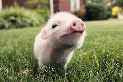 我已经四十岁了,除了这只猪,还没见过谁敢于如此无视对生活的设置.