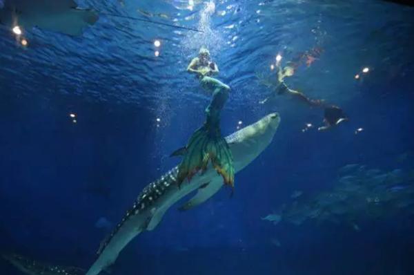 梦幻海底蓝巨鱼