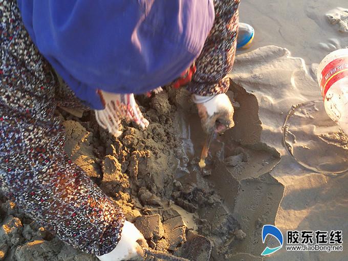 没有想到蛏子这种在海水里长大的生物,竟然怕盐,真是让人惊奇!