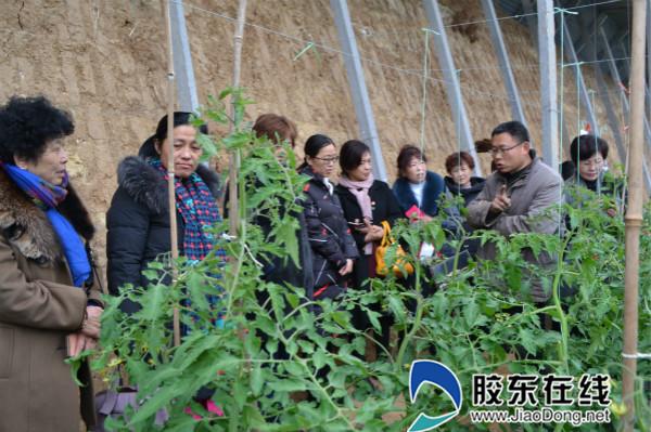 平里店镇组织妇女代表考察现代农业产业发展