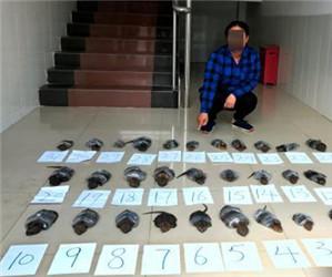 广西查获31只国家一级野生保护动物活体平胸龟