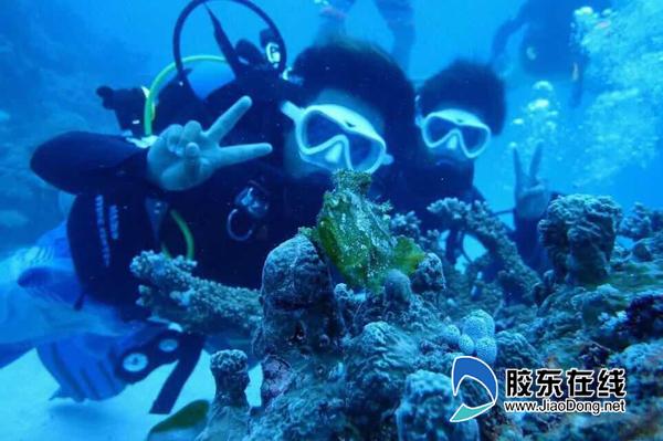 海洋极地世界潜水