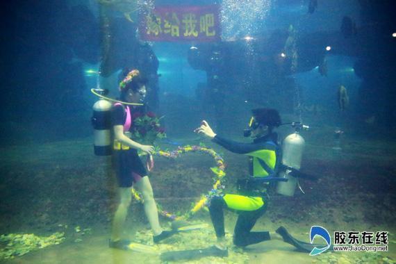 七夕,蓬莱海洋极地世界上演浪漫水下求婚