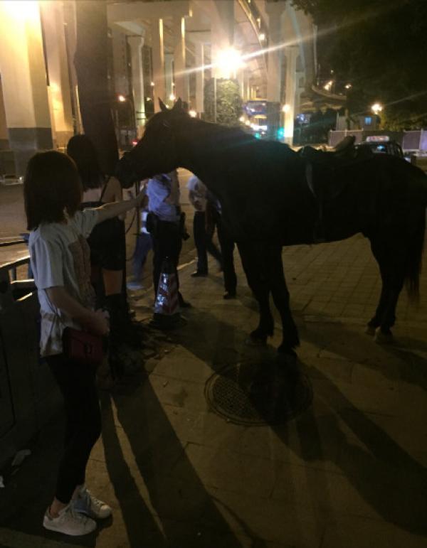 骑马回家_遛马?吊带衫女子深夜骑马穿行上海市中心:养的宠物 世相万千 ...