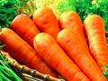 冬季补气食物能吃什么?5款食物能帮你补气