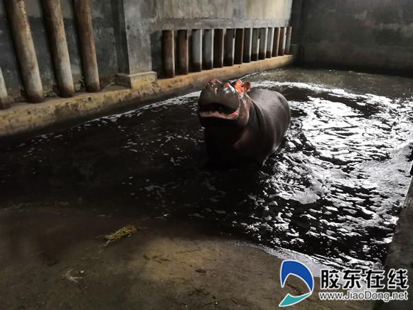 河马馆内,连水池里都有好几组暖气