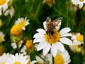 蜜蜂蜇伤后蜂针要拔掉吗?医生建议这样做
