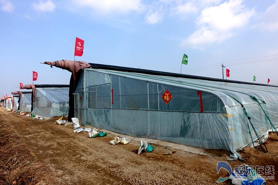 【新春走基层】烟台高新区上庄村亚博水果种植铺就致富路 高新区 烟台新闻网 胶东在线 国家批准的重点新闻网站