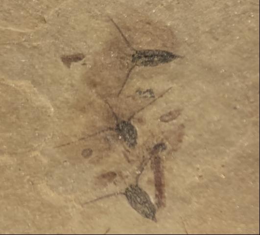 "疑似""新物�N""化石�F身�R�白�准o研�W�F��782"
