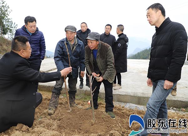 来自烟台的农业专家前往巫山县金坪乡袁都村为村民讲解大樱桃剪枝。