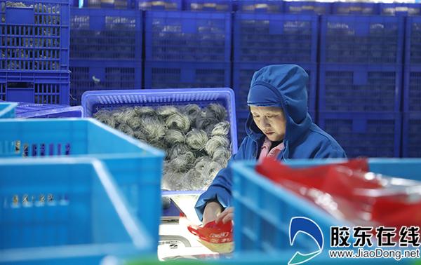 巫峡粉丝生产车间内工人正在包装红薯粉丝。