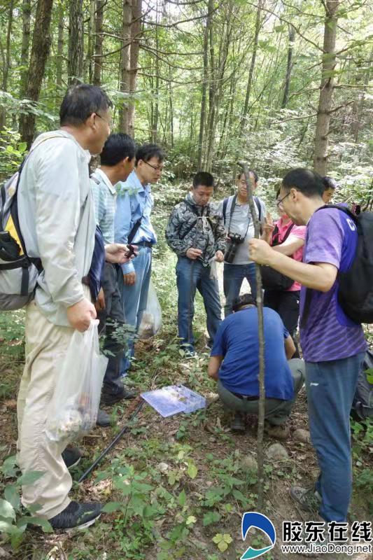 烟台博士团队开展野生食用菌调研情况。