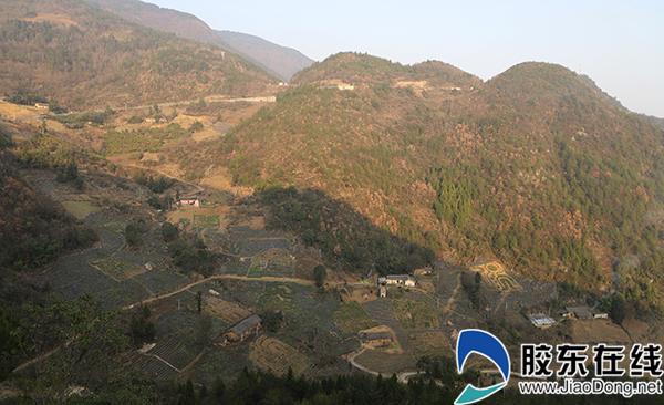 农旅融合扶贫项目万亩茶园部分生肖景观区,茶叶长势良好。